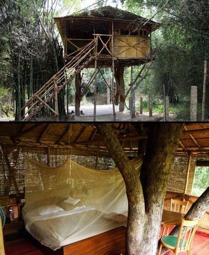 هتل های شگفت انگیز جهان - هتل جنگلی در هند